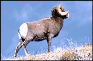 Domba-Domba Puskesmas Siap Diperas !
