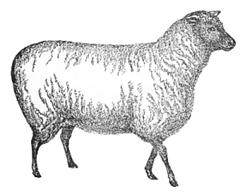 """Domba Bahenol pun sempat jadi bahan pembicaraan memuakkan di ruang sidang """"yang mulia"""" ituh .."""